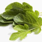 fig leaves treat diabetes